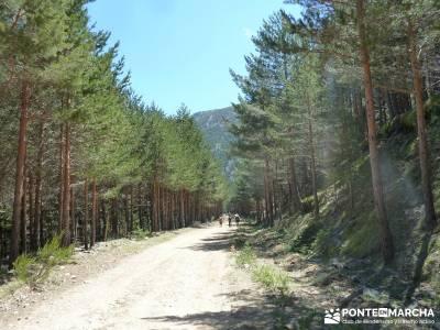 El pinar del Puerto de Navafría;viajes semana santa;excursiones cerca de madrid